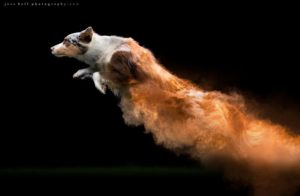 This Canadian Photographer Tossed Powder On Some Dogs And Made Something Amazing 5c3f504b2de7e__880