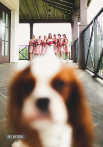Funny Wedding Photobombs 136 5a00391b2a455__700
