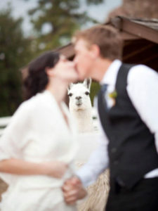 Funny Wedding Photobombs 144 5a005582ad008__700