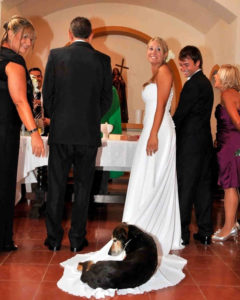 Funny Wedding Photobombs 146 5a005ae28171f__700